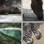 Endangered Animals photographs