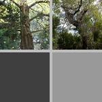 Endangered Plants photographs