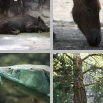 Endangered Species photographs