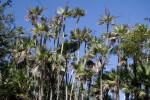 Everglades Palms