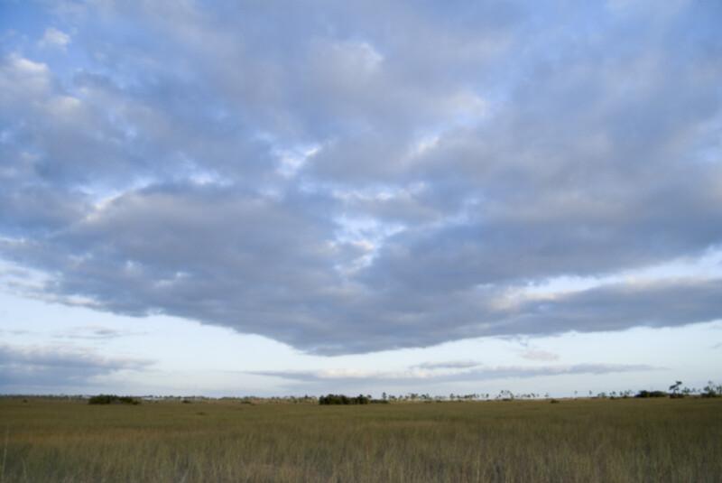Everglades Sky