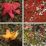Evergreen Park photographs