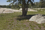 Exposed Granite at Tuolumne Meadows