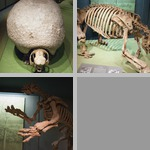 Extinct Mammals photographs