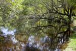 Fairchild Lake Shoreline