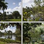 Fairchild Tropical Botanic Garden photographs