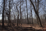 Fallen Branches, Fallen Leaves, and Bare Trees at Boyce Park