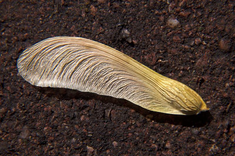 Fallen Dogwood Petal