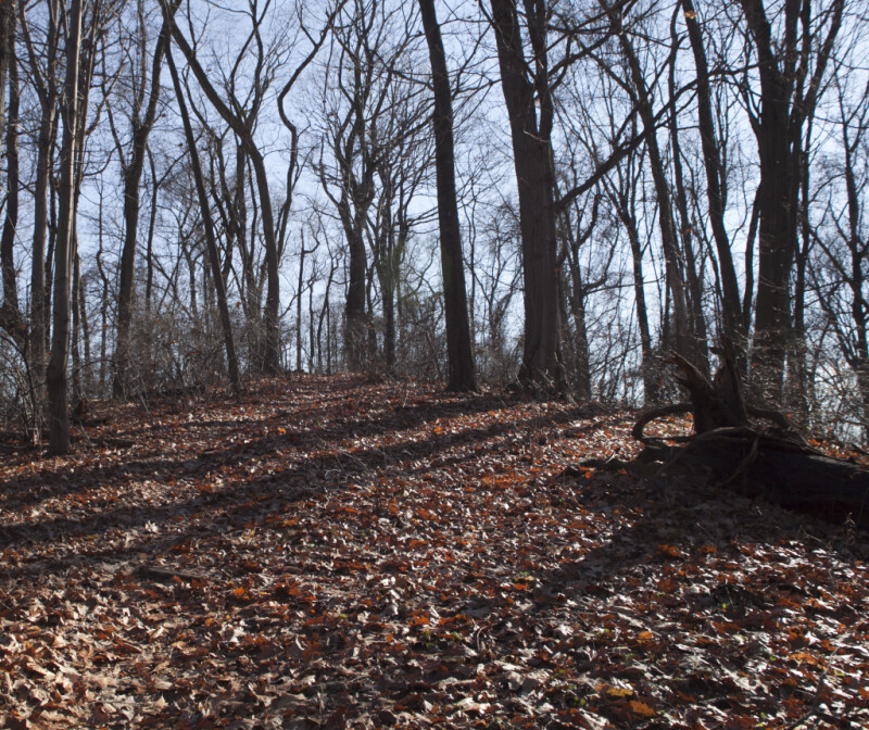Fallen Leaves and Bare Trees at Boyce Park