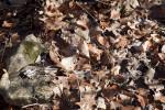 Fallen Leaves Near a Rock at Boyce Park
