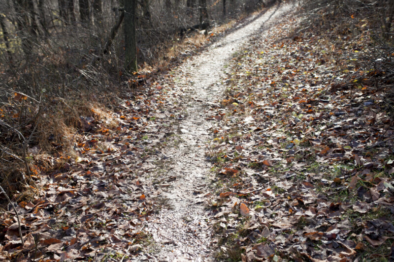 Fallen Leaves on Either Side of a Trail at Boyce Park