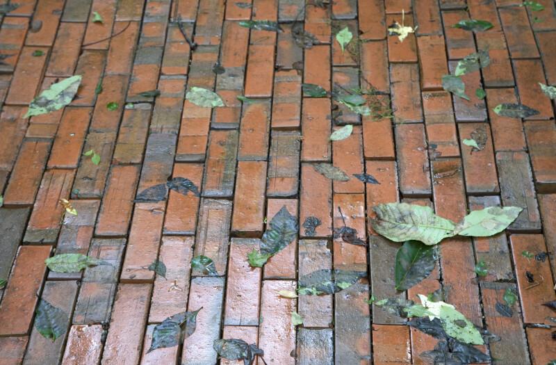 Fallen Leaves on Wet Bricks at the Kanapaha Botanical Gardens