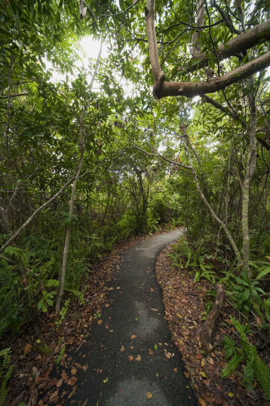 Fallen Leaves Swept to Side of Gumbo Limbo Trail