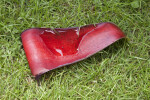 Fallen, Red Banana Tree Flower Petal