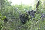 Fallen Tree Roots