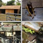 Farms photographs