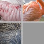 Feathers photographs