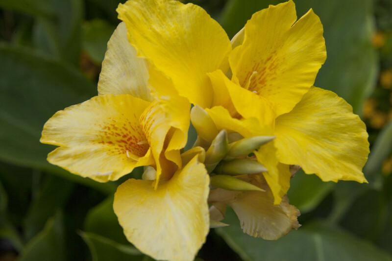 """""""Felix Rogout"""" Flower"""