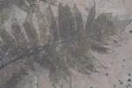 Fern Engraving