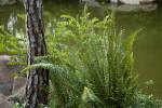 Fern near the Trunk of a Pine Tree