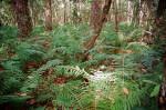 Ferns Along the Fort Caroline Nature Trail