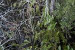 Ferns and Dwarf Bald Cypresses