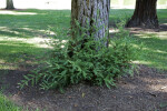 Ferns Growing Near a Tree Trunk