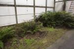 Ferns Indoors