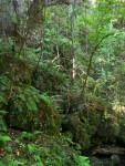 Ferns on Rocks