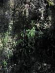 Ferns on Sinkhole Wall