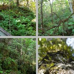 Ferns photographs