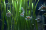 Few Fish Swimming in Tank