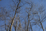 Few Leaves on the Branches of Trees