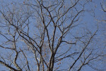 Few Leaves on Tree Branches at Boyce Park