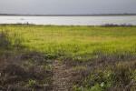 Field of Grass at Myakka River State Park