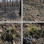 Fires photographs