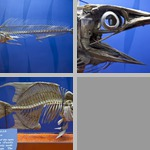 Fish Anatomy photographs