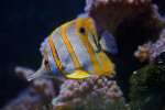 Fish with Yellow Stripes
