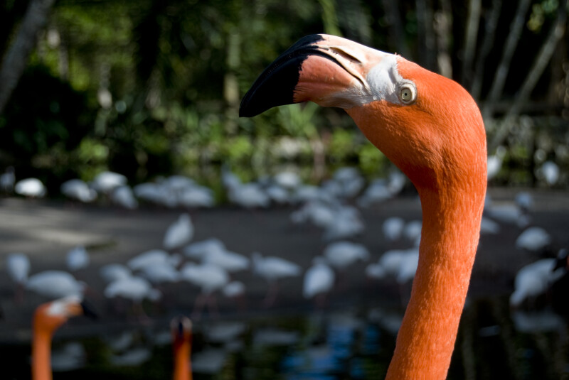 Flamingo Head Detail