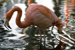 Flamingo Lifting Head