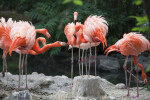 Flamingos at Denver Zoo