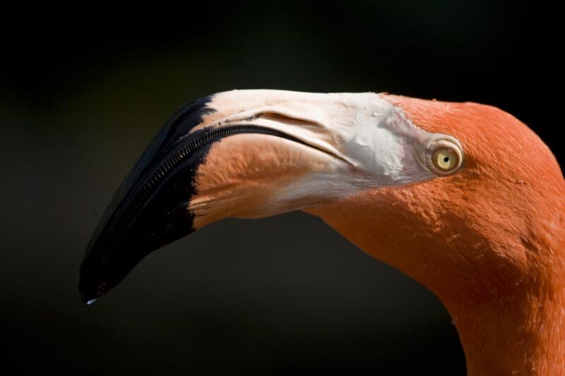 Flamingo's Head