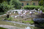 Flock of Flamingos