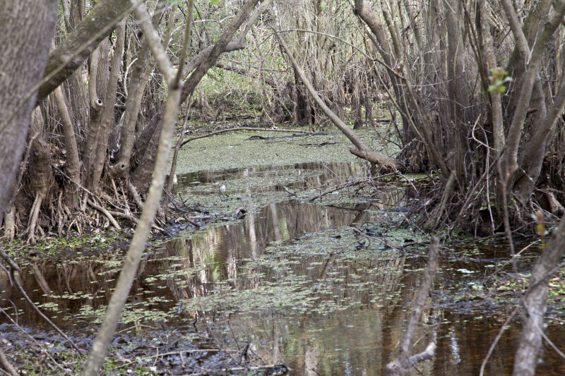 Flooded Area at Myakka River State Park