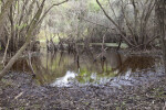 Flooded Area at Myakka River State Park