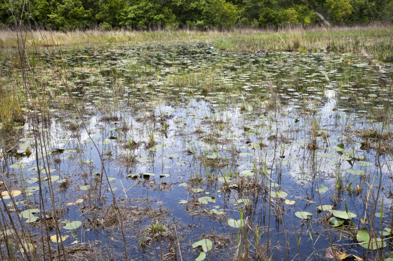 Flooded Area of May's Prairie