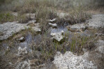 Flooded Grass Growing Amongst Rocks at Pa-hay-okee Overlook of Everglades National Park
