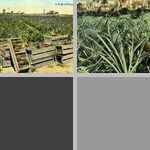 Florida Agriculture photographs