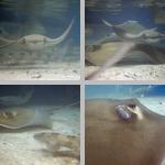 Florida Aquarium photographs