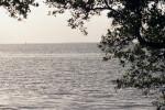 Florida Bay and Tree